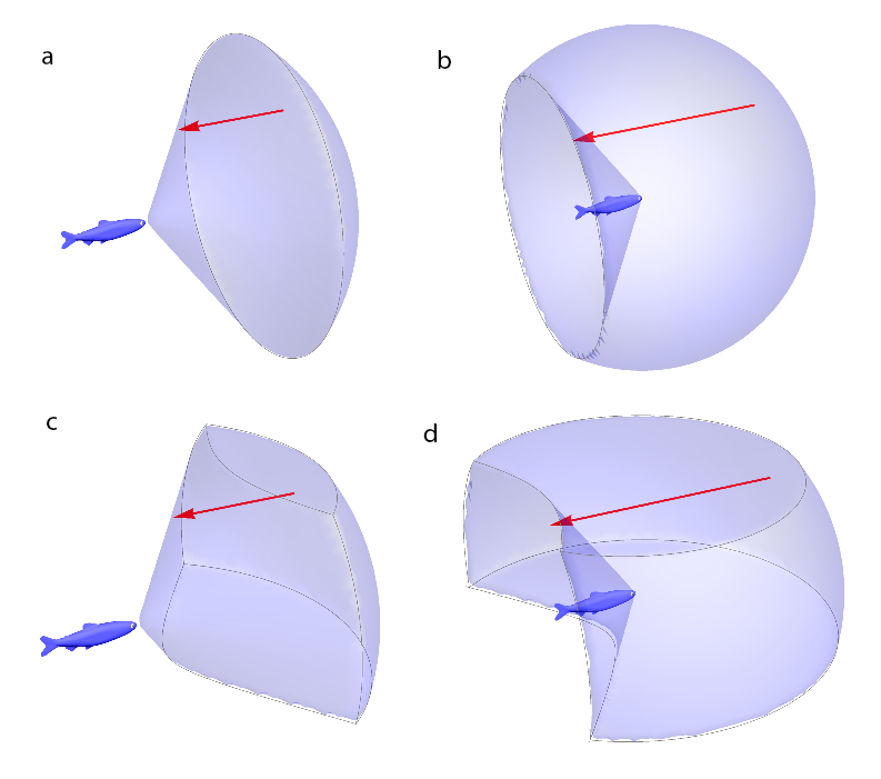 Possible shapes of the region in which a drift-feeding fish detects its prey (red arrows indicate the direction of flow). These are from a preliminary version of our model.