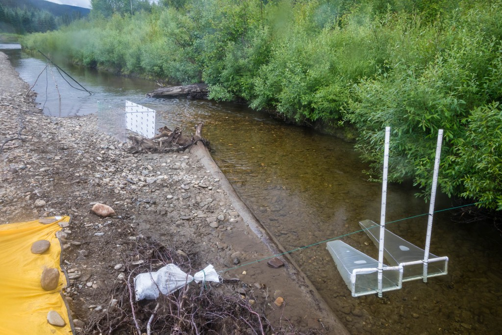 Coarse and fine mesh drift nets set up upstream of the fish