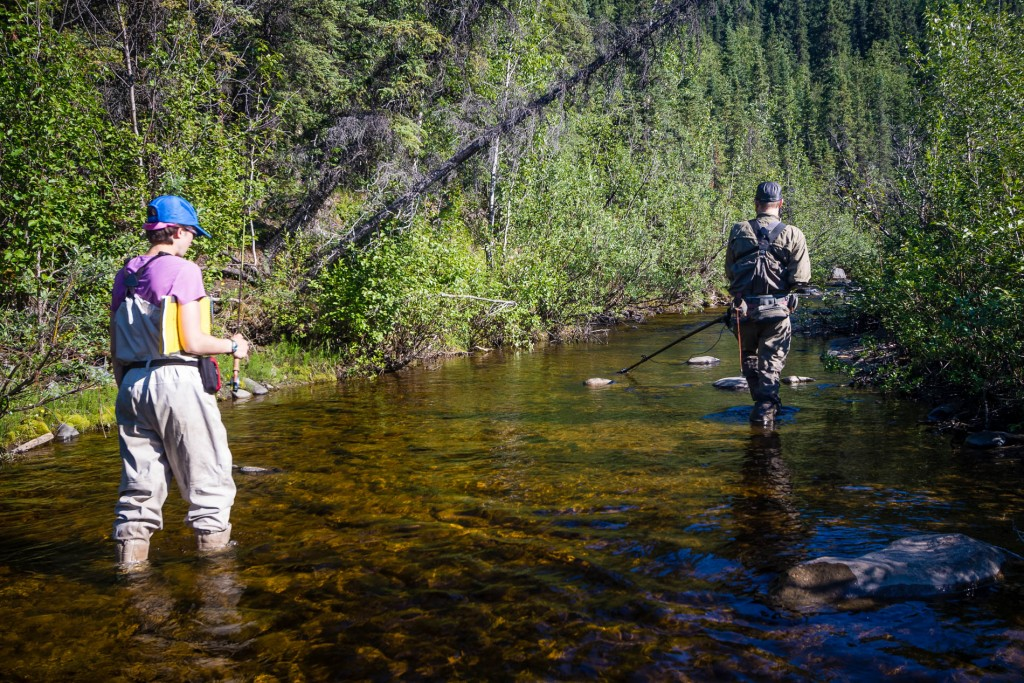 Searching for dolly varden to film with the GoPro-on-a-stick whi