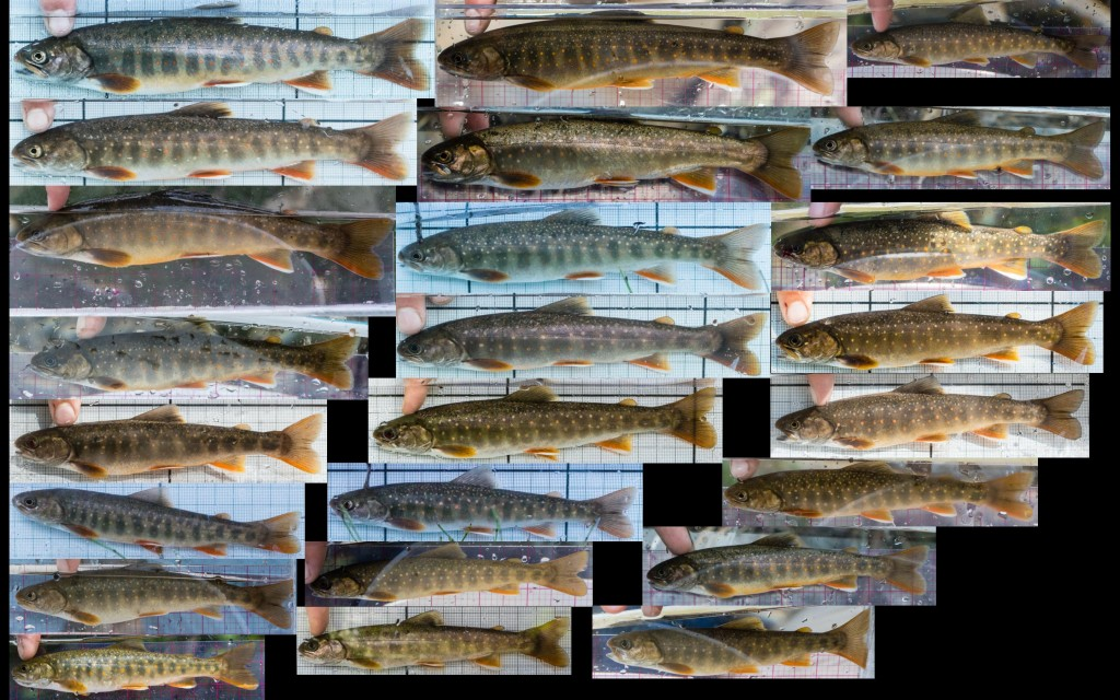 Weighted2015Fish_Dolly_LeftView_2880